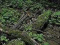 Bubovice-Srbsko - panoramio (115).jpg