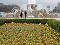 Buckingham Fountain with Tulips.jpg