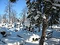 Bucuresti, Romania, Cimitirul Bellu Catolic (Zi de iarna foarte geroasa) (2).JPG
