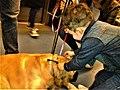 Bucuresti, Romania. Imagine cu un caine si un copil in Metrou. Aprilie 2018. (3).jpg