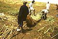 Budowa łodzi papirusowej - Nigeria - 001271s.jpg