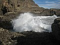 Bull kelp (Durvillaea antarctica) is flung about by a wave breaking at The Gap, Piha.jpg