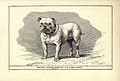 Bulldog BDL 3.jpg
