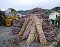 Bundles of sugar cane - Dec 2011.jpg