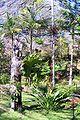 Burrendong Gardens Fern Gully.JPG