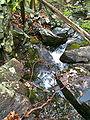 CFPAWhitestoneCliffsTrailBrook2.jpg