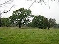 Cadzow Oaks - geograph.org.uk - 261624.jpg