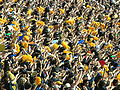 Cal student section at 2008 Big Game 2.JPG