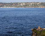 California sea lions in La Jolla (70579).jpg