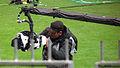 Caméra, Coupe de la Ligue Final 2010.jpg