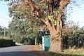 Carvalho-roble situado no lugar da Carvalheira, Guimarei - 07.jpg
