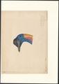 Casuarius papuanus - kop - 1878 - Print - Iconographia Zoologica - Special Collections University of Amsterdam - UBA01 IZA1000645.tif
