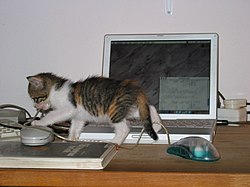 Cat-and-computer.JPG