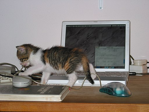Cat-and-computer