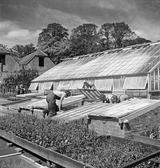 Cecil Beaton Photographs- Women's Horticultural College, Waterperry House, Oxfordshire, 1943 DB248.jpg