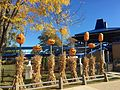 Cedar Point HalloWeekends pumpkins near Corkscrew (4768).jpg