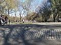 Central Park (5640272659).jpg