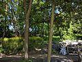 Central Park in Roseville 07.jpg