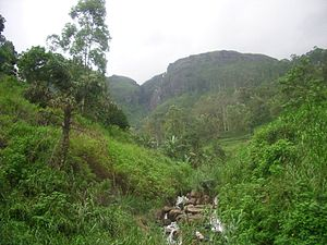 Kandyan Wars - Terrain near Kandy; much of the Kingdom was mountainous, thickly forested and malarial, and the routes to Kandy were kept secret and well-guarded.