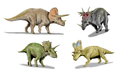 Ceratopsidae-BW-003.png