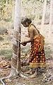 Ceylon rubber.jpg