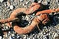 Chain anchor shackle on beach.jpg