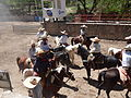 Charreada en El Sabinal, Salto de los Salado, Aguascalientes 09.JPG