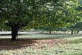 120px Chestnut tree02