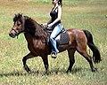 Clean horse.jpg