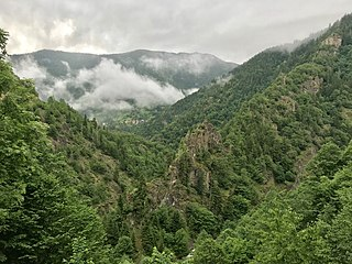 Forest in Turkey Woodland and maquis in the Eurasian country