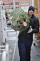 Coast Guard Cutter Mackinaw arrives in Chicago with 1,200 Christmas trees 131206-G-PL299-008.jpg