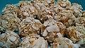 Coconut Balls (Bolitas de Coco) (26197511606).jpg