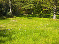 Colchicum autumnale - Marburg 001.jpg