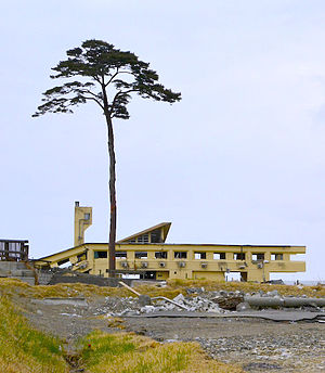 Rikuzentakata, Iwate - The Miracle Pine at the site of Takata-Matsubara
