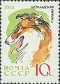 Collie-Canis-lupus-familiaris SU 1965 stamp.jpg