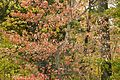 Colorful fall foliage.jpg
