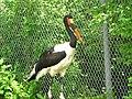 Colourful beak (9110126529).jpg