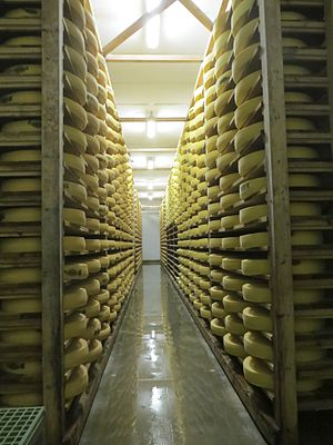 Comté cheese - Wheels of comté cheese in storage, Burgundy France