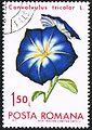 Convolvulus tricolor - Posta Romana - 1971 - flower 150B.jpg