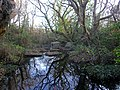 Cooden Moat, Bexhill.jpg