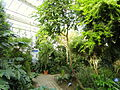 Cool Temperate House - Lyman Plant House, Smith College - DSC04376.JPG