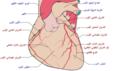Coronary arteries-ar.png