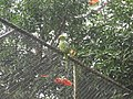 Costa Rica (6094715356).jpg