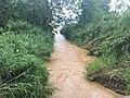 Costa Rica - Nate Small Rivulet.jpg
