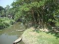 Country canel in Parulpara, Munshiganj..jpg