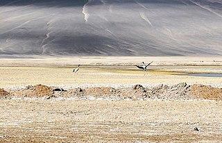 Wildlife of Ladakh