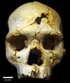Crâne 17 de la Sima de los Huesos.png