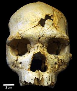 Crâne 17 de la Sima de los Huesos
