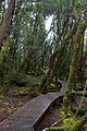 Cradle Mountain National Park walk (5398458757) (2).jpg