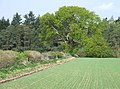Crop Field and Woodland, near Wooton, Shropshire - geograph.org.uk - 408428.jpg